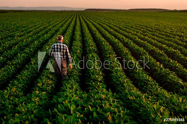 hombre cultivando